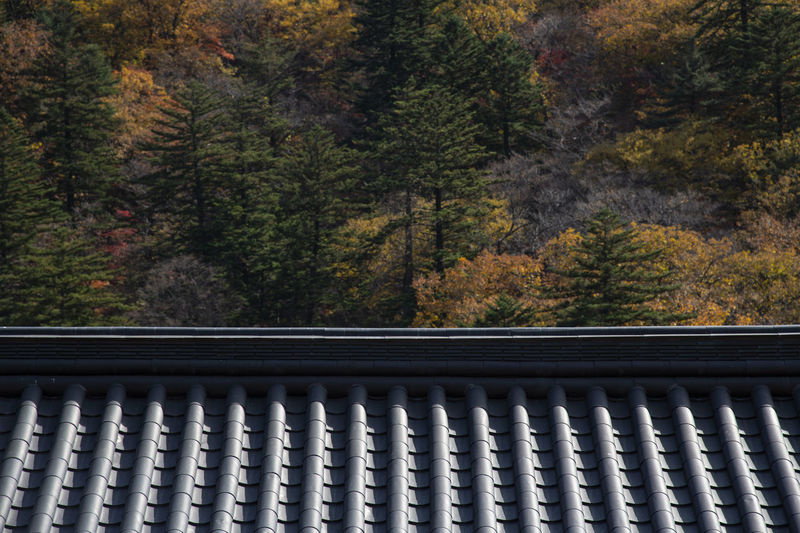 Close-up of railing by trees in forest during autumn