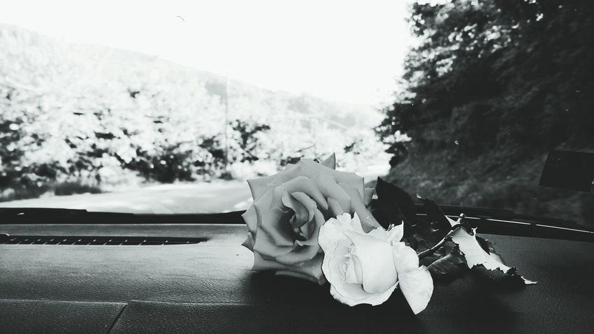 Feel The Journey EyeEmNewHere The Week On EyeEm First Eyeem Photo Road Roses Roses🌹 Car Windshield Wildlife Black & White Photography Photoshoot Photo Beauty In Nature Beautiful Nature Photography Nature_collection No People Nature Non-urban Scene Nature On Your Doorstep Natural Nice Lifestyles