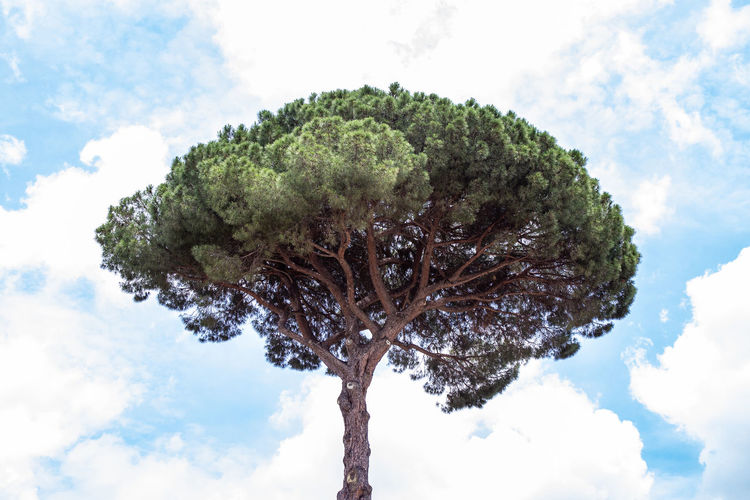 Brócoli gigante Beauty In Nature Branch Close-up Cloud - Sky Day Environment Green Color Growth Nature No People Plant Single Tree Sky Tree Tree Trunk Trunk