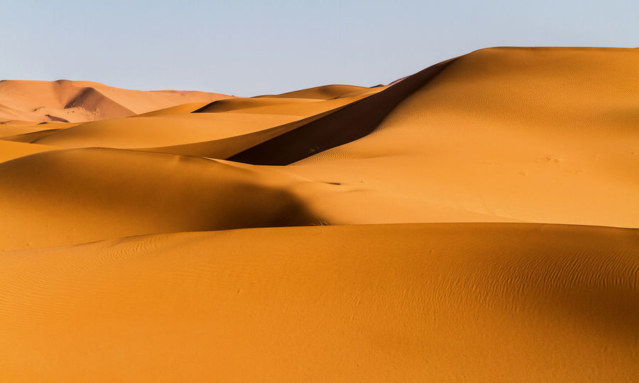 Light and Shadow in the Sahara desert Beautiful Nature Desert Dunes Ergchebbi Light Lighting Equipment Morocco Nature Photography Tranquility Dry Flower  Landscape Merzouga No People Sahara