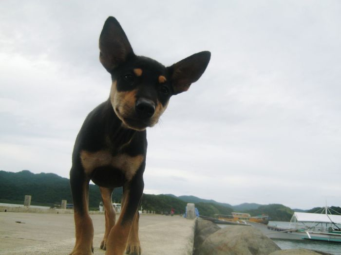 A curious street dog inspects my camera. Frog's eye view. Biding time @ San Vicente fish port. Taking Photos Hello World Enjoying Life Outdoors Just Today Travelling Taking Photos Outdoors