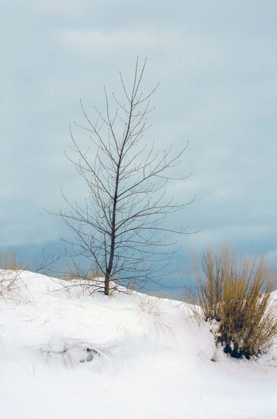 a single tree on a snow covered hill over Lake Michigan USA Winter Snow Cold Temperature Tree Bare Tree Beauty In Nature Tranquility Plant Tranquil Scene Sky Scenics - Nature No People Land Non-urban Scene Nature Day Landscape Cloud - Sky Environment Outdoors Isolated Cold Lake Michigan Dunes USA Seasonal