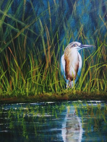 "Squacco Beron ,a master fisherman from Kenya.oil on canvas 14""_20"". Animal Themes Nature Bird Animals In The Wild Reflection Grass One Animal Beauty In Nature ArtWork My Art Collection Original Art Art, Drawing, Creativity Drawing Fine Art Oil Painting Scenics My Best Friends ❤ Tranquillity Wildlife & Nature Beauty Nature Friendship. ♡   Love♥ Koi My Landscape Collection. With my best friends"