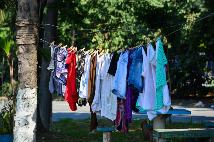 ezefer Hanging Clothing Laundry Drying Clothesline Day Textile Tree Focus On Foreground Nature No People Plant Outdoors Sunlight In A Row Group Of Objects Coathanger Side By Side Rope Washing Garment São Paulo The Street Photographer - 2019 EyeEm Awards Olharpelacidade