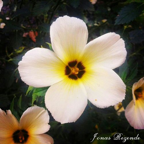 Hi! Hello World Vida Brasil Paraguaçu MG Fé Nature Flora Flores Jonas Rezende