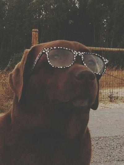 Stylish bonnie ;) Dog Fashion Glasses