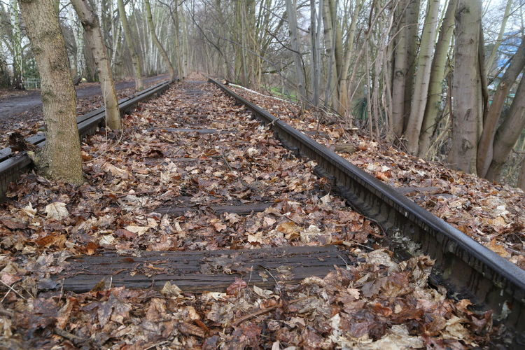 Tree Rail Transportation Track Railroad Track Forest Land Nature Direction Autumn No People Plant Day The Way Forward Transportation Leaf Plant Part Tree Trunk Trunk Change Metal Outdoors WoodLand Gravel Leaves Parallel