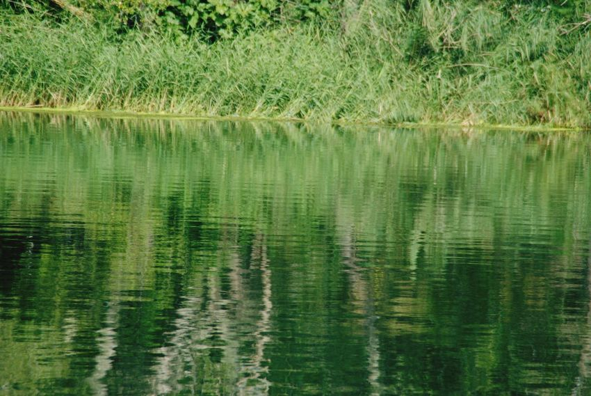 Reflection Water Nature Grass No People Day Beauty In Nature Terres De L'Ebre Benifallet Tranquility Travel Destination Lo Riu Es Vida Lo Riu Riu Ebre River Ebre Green Verd
