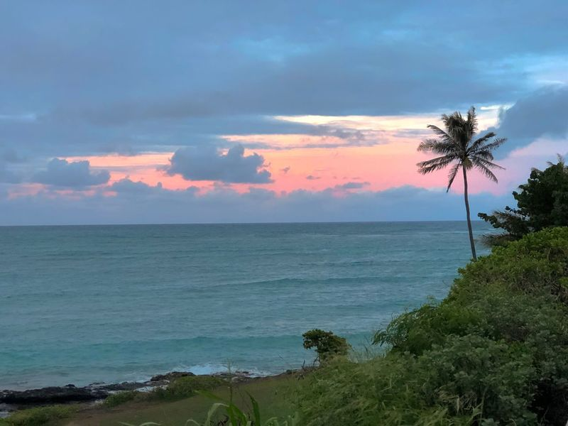 Oahu, Hawaii Palm Tree Lonely Beach Sunset Orange Sky Kailua Beach Sea Horizon Over Water Scenics Sky Beauty In Nature Nature Beach Tranquil Scene Cloud - Sky Outdoors Water No People Tranquility Tree Palm Tree Day