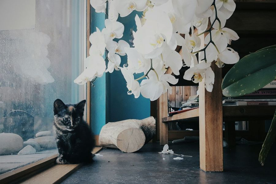 Minibou. Home Is Where The Art Is Cat Flowers Cozy Books Eyeemphotography