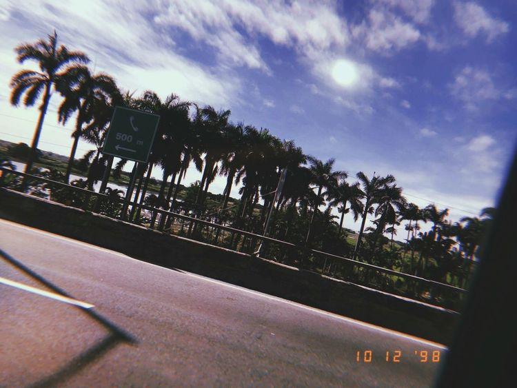Traveling Highway Trees Escape Enjoy