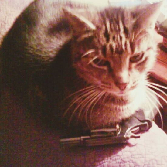 An old photo of Pepper gaurding the Smith&Wesson .357 Magnum. Cat Pepper SmithAndWesson SixShooter