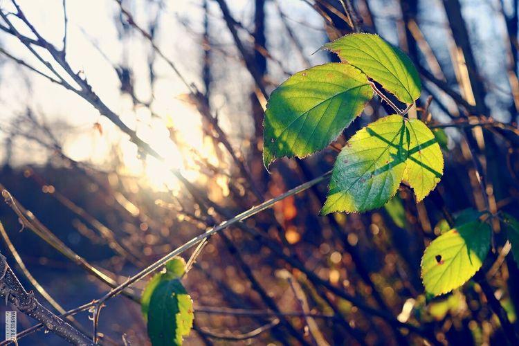 Comingsoon Spring Sunset Leaves Bokeh X-E2 EyeEm Best Shots Landscape Fujifilm X-E2