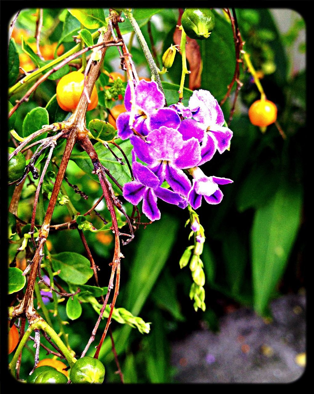 growth, beauty in nature, flower, nature, outdoors, plant, freshness, focus on foreground, day, no people, close-up, fragility, petal, branch, flower head, tree