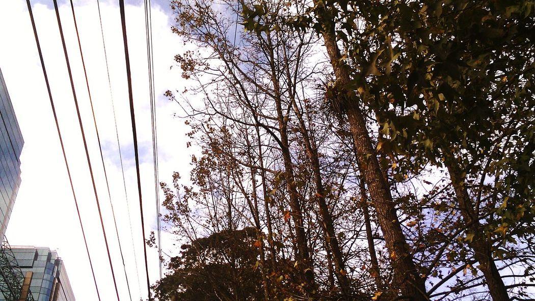 Vestigios de Otoño, Liqiuidambar en época seca Trees Urban Nature Everyday Walk