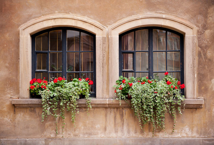Flowers growing on window boxes