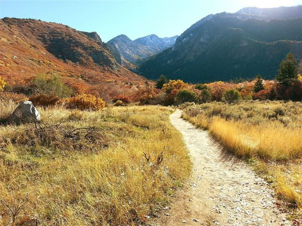 Trail Trail Running Hiking Hiking Trail Salt Lake City Salt Lake City, Utah Salt Lake City Outdoors Slc Utah Wasatch Wasatch Mountains Wasatch Front Mountains Mountain View Mountain Trail Fall Colors Fall Autumn Autumn Colors Lost In The Landscape