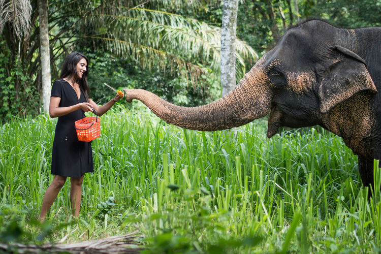Full length of young woman feeding elephant
