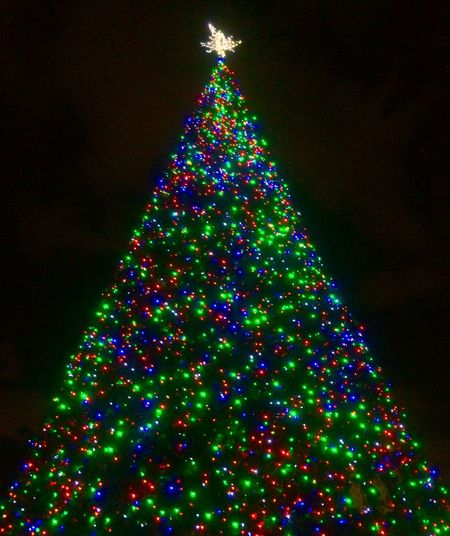 100 foot Christmas tree in Delray Beach Florida Travel Christmas Tree Holiday Holiday Lights Christmas Lights Visitdelraybeach