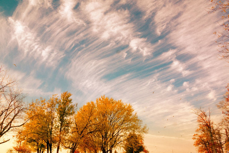 Fall Colors Autumn Beauty In Nature Branch Cloud - Sky Day Fall Skies Low Angle View Nature No People Outdoors Scenics Sky Tranquil Scene Tranquility Tree