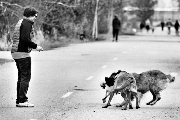 disorder and loss of leadership Candid Dog People Anxiety Animals Photography Blackandwhite