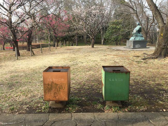 Japan Japan Photography Japanese Garden Plum Blossom Plum Plumgarden Garbage Can Tokyo,Japan Fuchu-shi Kyodonomori-museum Kyodonomoripark Daytrip Tree Green Art Is Everywhere