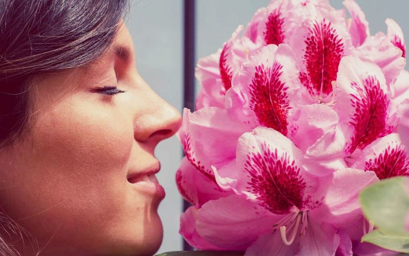 Close-Up Of Beautiful Woman Smelling Pink Flowers