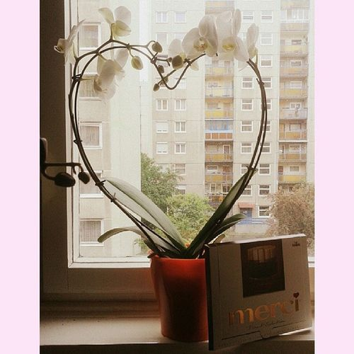 Szeretem Anyát! ♥ Love Mum Mothersday Mumdidntwantapicture heart flower merci chocolate