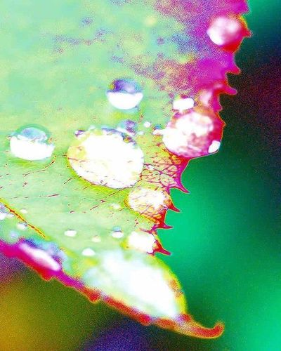 It's been raining light this week. It's more like continous drizzle. I hope this Icu_waterdrops pic gives you idea. 2) Ig_affair_weekly 3) Tv_depthoffield 4) Dof_addicts 5) 5star_images 6) Macro_vision 7) Sn_mar2 8) Natureloversgallery 9) Mta_macro 0) Splendid_dof 1) Tgif_nature 2) Pocket_macro 3) Igglobalclubmacro 4) Macro_captures 5) Fotofanatics_macro_ 6) Flaming_flora 7) Macroworld_tr 8) 9vaga_macro 9) Flair_macro 0) Igbest_macros 1) Ptk_macro 2) Naturehippys 3) Macro_secrets 4) Galeri_makro 5) Macro_holic 6) tv_depthoffield 7) macro_brilliance 8) best_macro 9) show_us_macro 0) colors_ofourlives