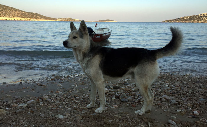 German Shepherd Sea View Boat Dog IPhoneography Iphoneonly Iphonephoto Mersin Turkey