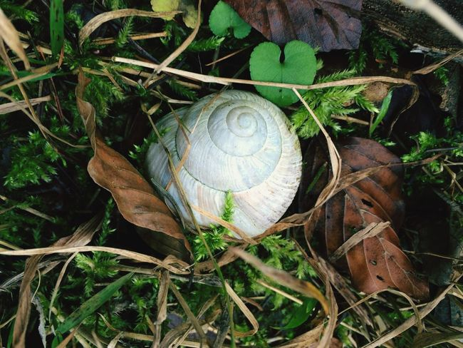 Schneckenhaus Naturelovers Beautiful Nature Nature Snail EyeEm Nature Lover Animal Waldspaziergang A Walk In The Woods