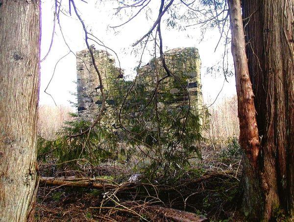 Old ruin in Connemara Ireland Old Old Buildings Architecture Ruin Connemara Ireland Travel Eyeem Travel Trees