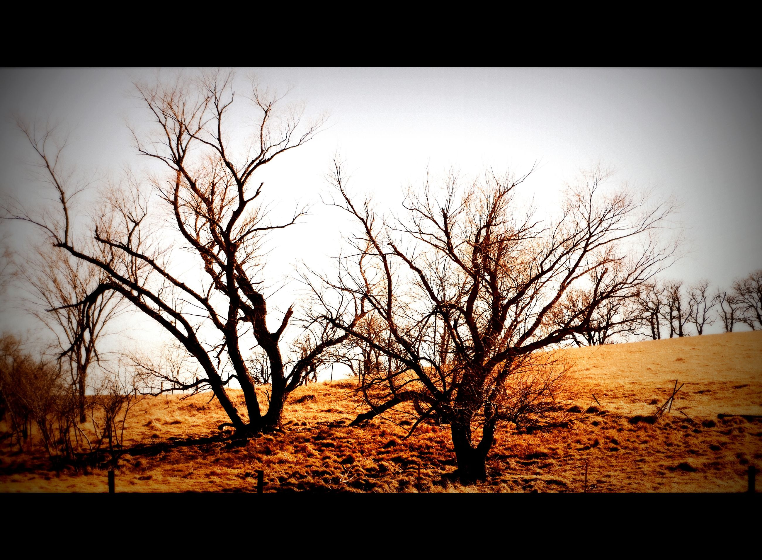 bare tree, nature, landscape, tree, tranquility, beauty in nature, branch, outdoors, no people, sky, lone, scenics, day, bleak