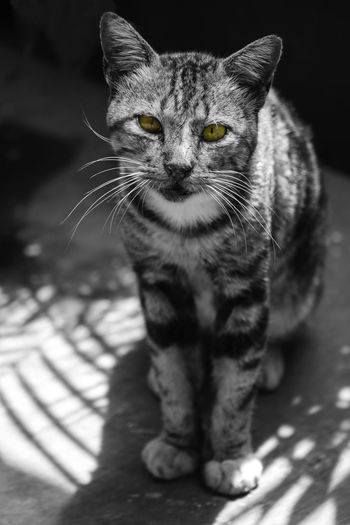 Neko Cat Kucing Blackandwhite Black & White Selective Color Mood Animal Photography Mood Captures Animal Hewan INDONESIA EyeEmNewHere Blackandwhite Photography Black And White Eye Cute Cute Pets Cats Of EyeEm Nikon Face