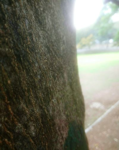 Tree Trunk No People Close-up Day Tree Outdoors Nature Grass Sky Closeup Photography Bark Surfaces And Textures Surface Of Tree