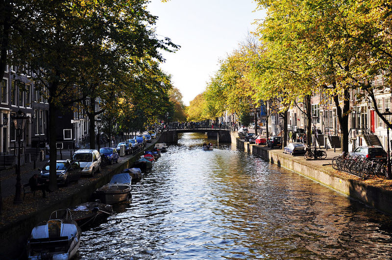 Canal along trees