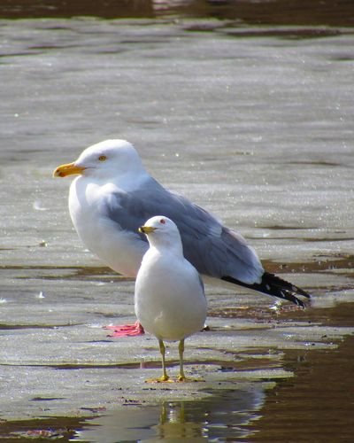 TWO SEAGULLS ON