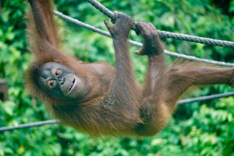 Monkey hanging from rope in forest