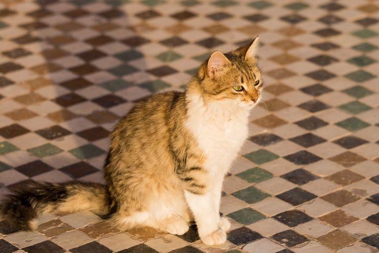 Cat On Floor