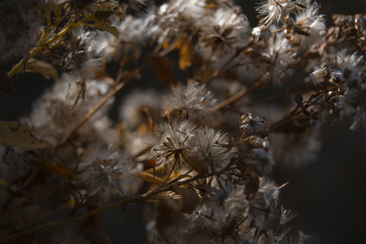 Plant Fragility Nature Vulnerability  No People Close-up Selective Focus Growth Flower Outdoors Flowering Plant Beauty In Nature Tranquility Day Focus On Foreground Freshness Dead Plant Dried Dried Plant Wilted Plant Dry Belarus Nature Autumn colors Light And Shadow Beauty In Nature