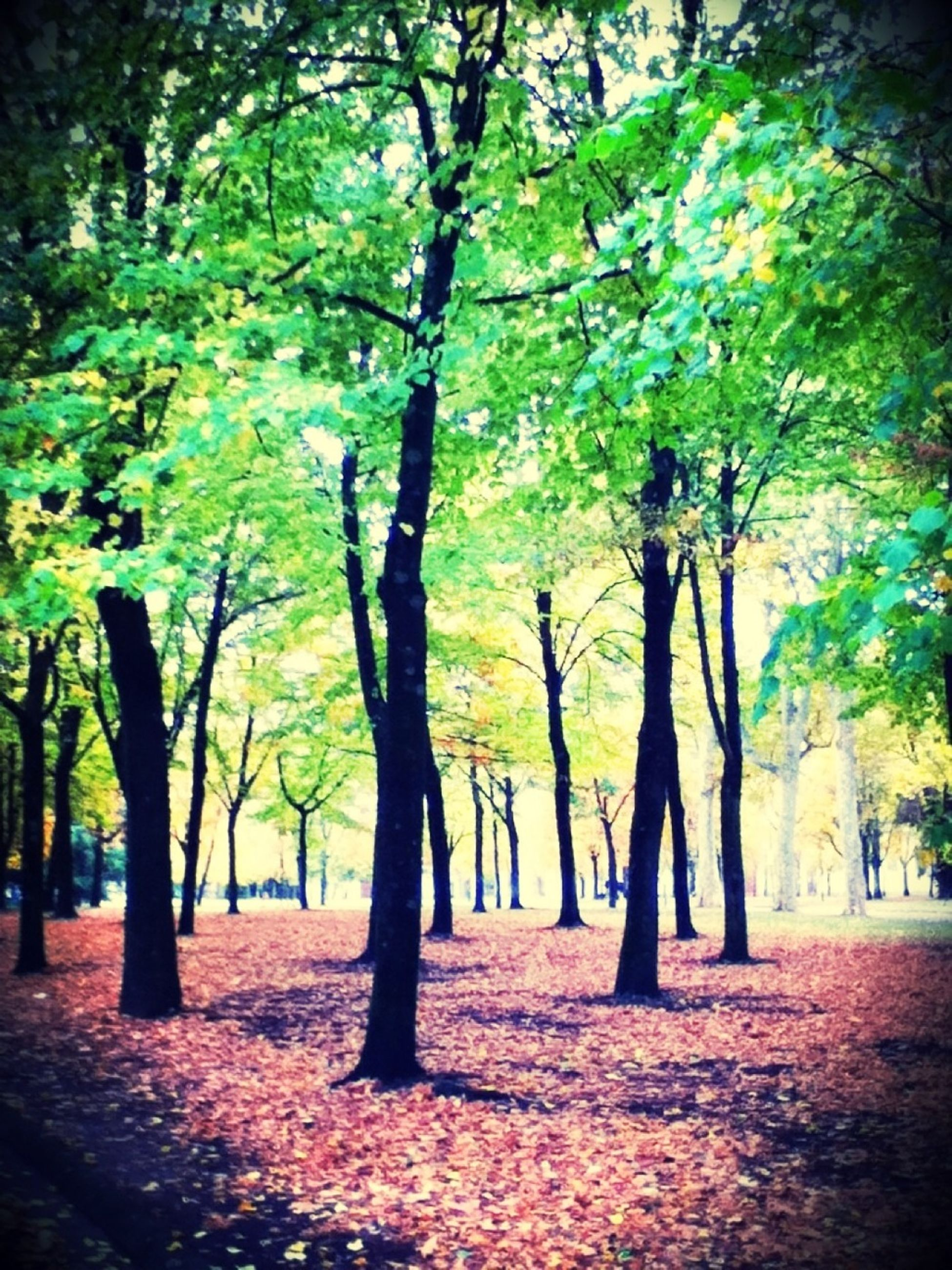 tree, tree trunk, autumn, growth, change, tranquility, nature, beauty in nature, season, tranquil scene, branch, park - man made space, scenics, yellow, forest, treelined, leaf, day, outdoors, no people