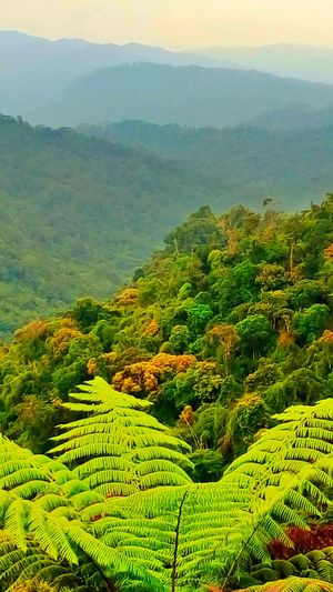 Range of Titiwangsa Nature Landscape Mountain Agriculture Green Color Tropical Climate Field Beauty Forest Social Issues Plant Tranquility Beauty In Nature Tea Crop Outdoors Scenics Terraced Field Sky Tree No People