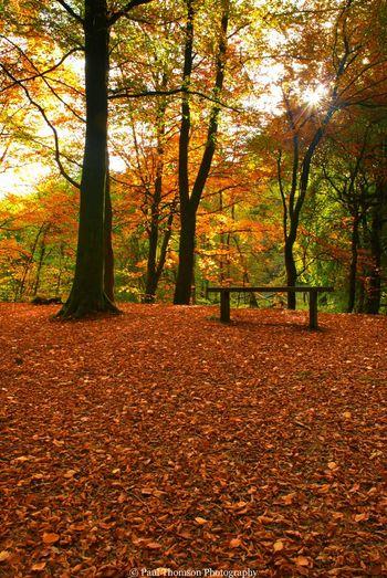 Autumn Light Gelt Woods Landscapes Outdoor Woods Brampton Uk Nature Walking