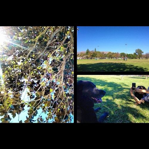 Tree, Park, Mom being a dog photographer.. Igers Blacky  Bluesky Clearsky park mom clearmymind relax nofilter theyrecute ilovethem moneytrees yabish kendricklamar