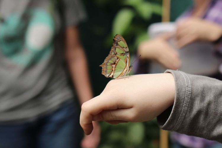 Cropped image of child hand with butterfly