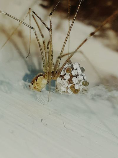 """Spider & Eggs"" EyeEmNewHere Fantastic Egg Spider Eggs Insect Spider Animal Themes Close-up"
