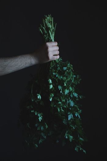 Person holding plant against black background