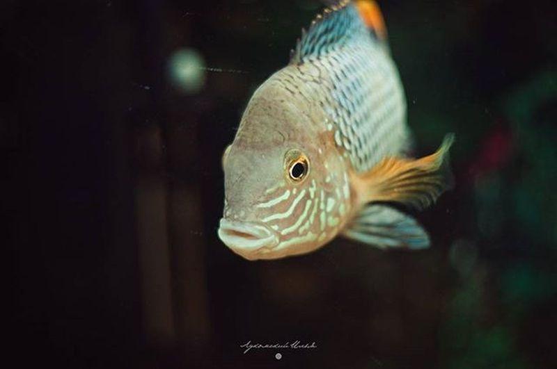 Fish Water Minimal Aquarium Nikon Photo Nikon_photography_ Under_the_water Colors