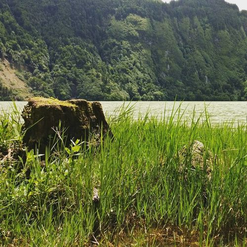 Nature Grass Green Color No People Outdoors Water Day Lake Tranquility Beauty In Nature Landscape Azores, S. Miguel