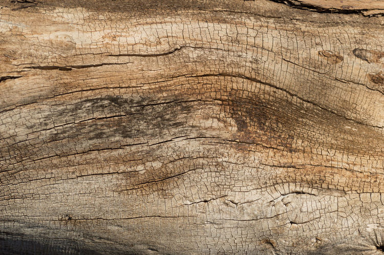 wooden texture Pattern Texture Textured  Textures And Surfaces Tree Wooden Woody
